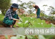 农作物植保员